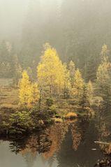 Buhlbachsee Nebel II