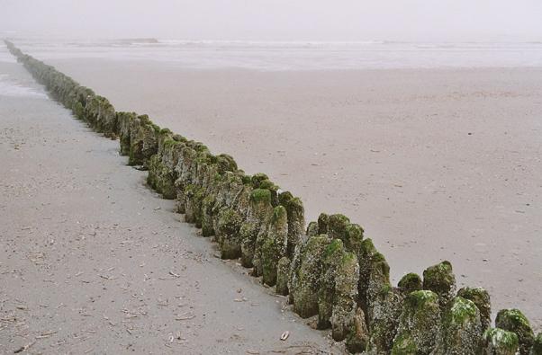 Buhne im Küstennebel