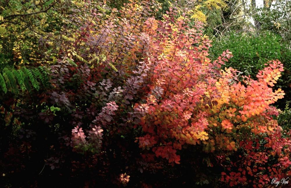 Buisson d'automne