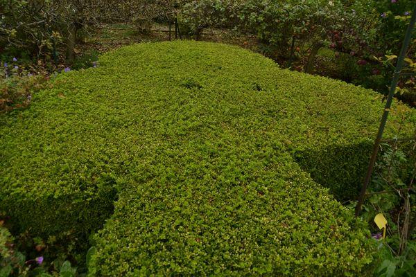 Buisson trèfle