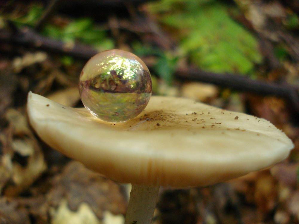 bulle de champignon
