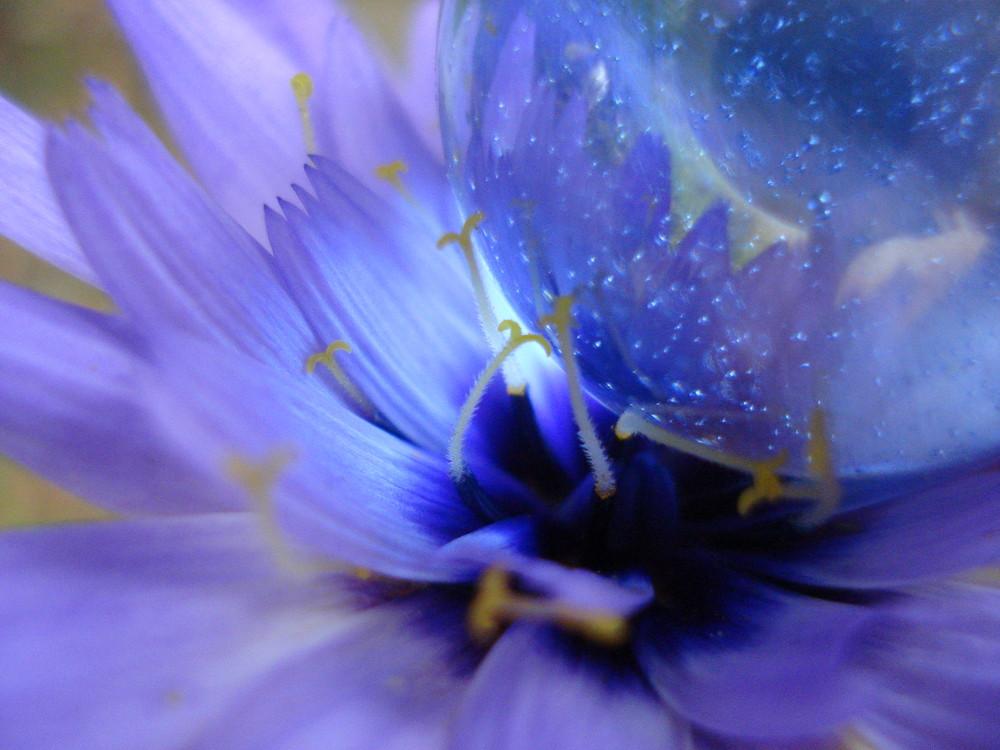 bulle fleur