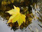 bulles d automne