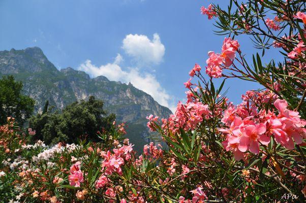 Bummel in Riva (2)
