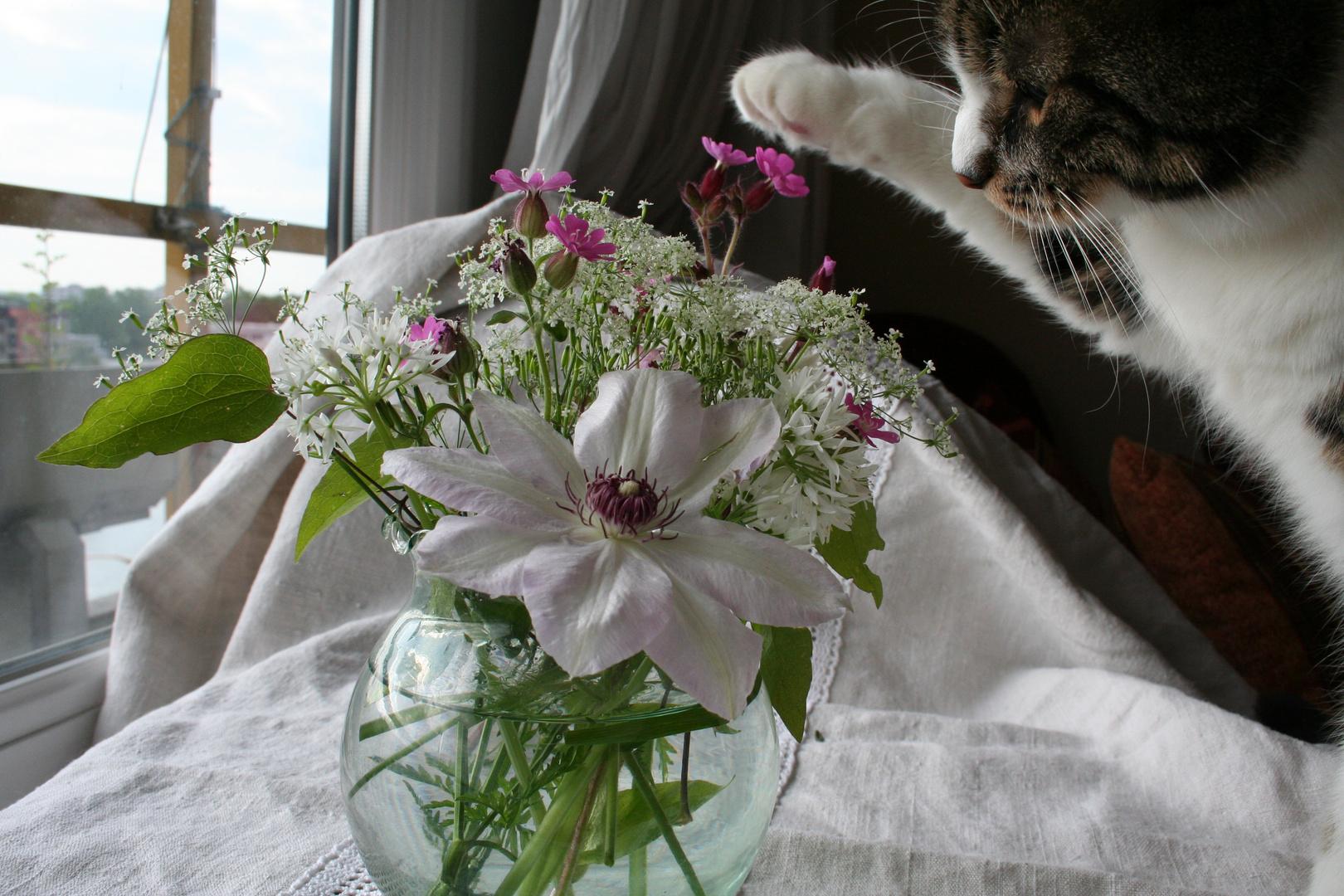 Bumsti beim Vernichten eines Blumenstrauß`