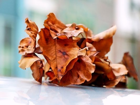 ... bunch of dried leaves