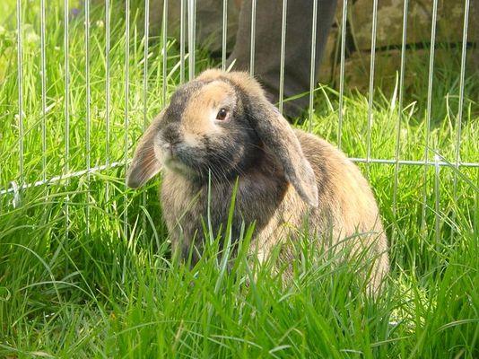 Bunny als Modell