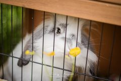 Bunny caged
