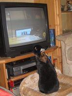 bunny-tv