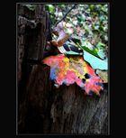 Bunte Blätter fallen....