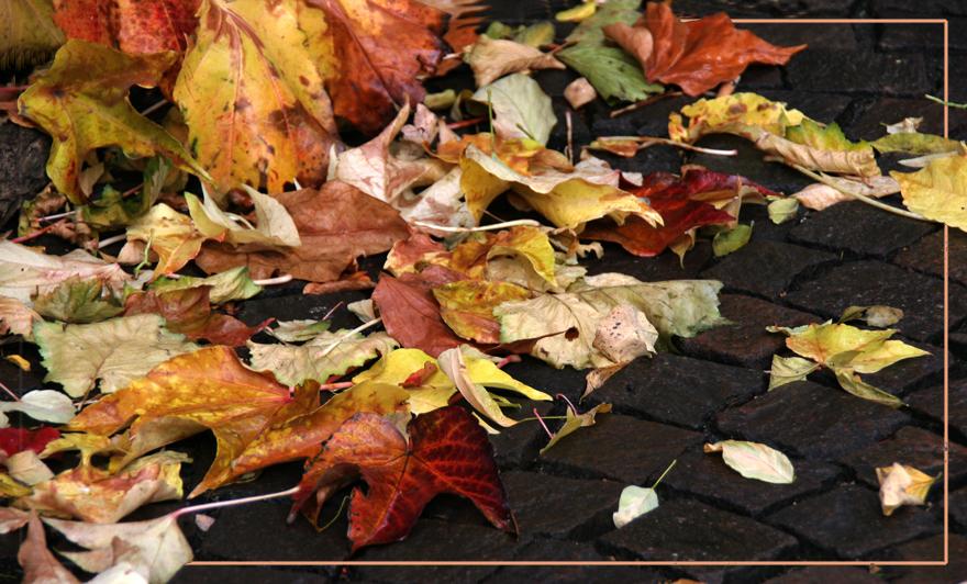 bunte Blätter fallen..