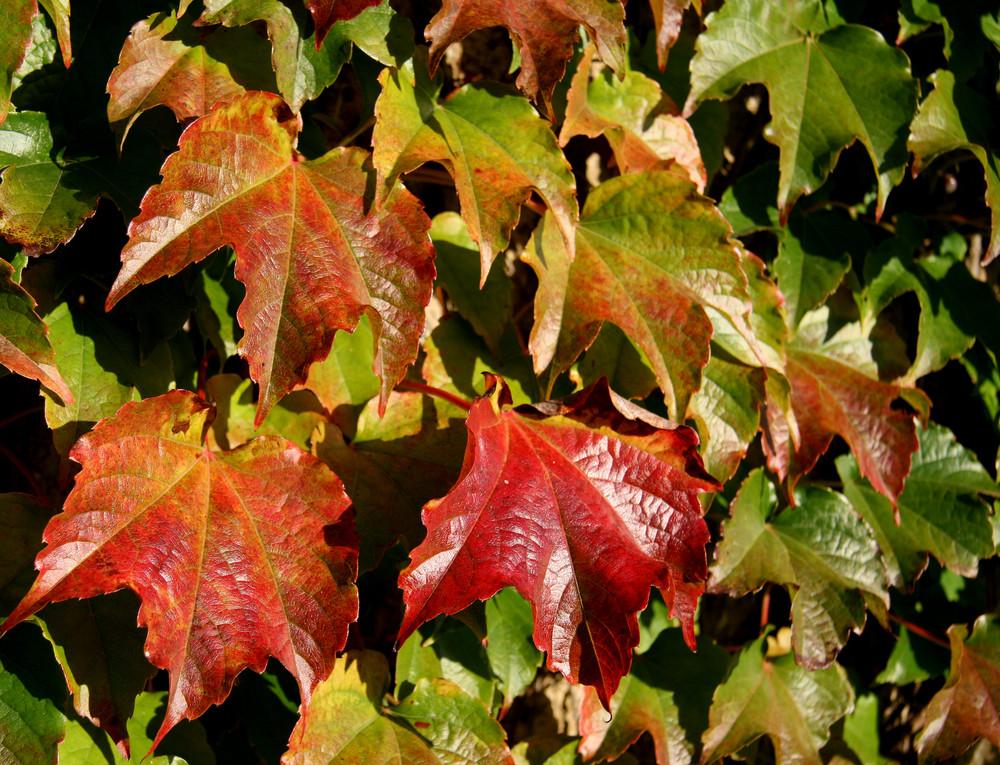 bunte Blätter fallen...