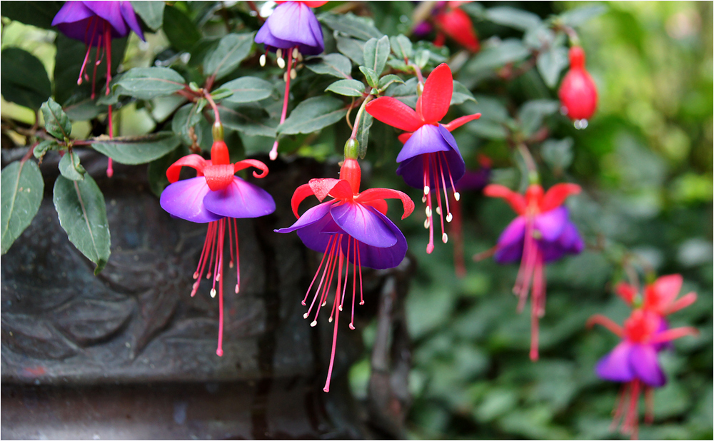 bunte Blüten