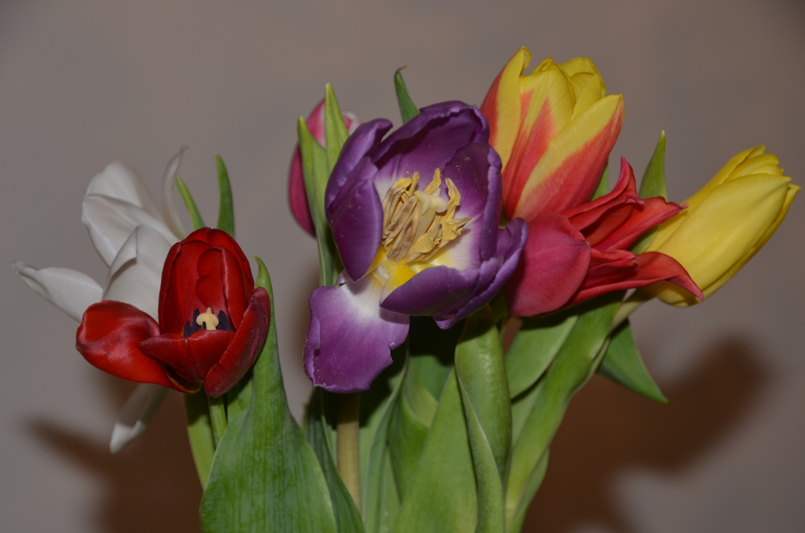 Bunte Blüten der Hoffnung :)