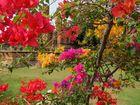 Bunte Blüten in einem den Tourismus Pfaden nicht bekannten Tempel