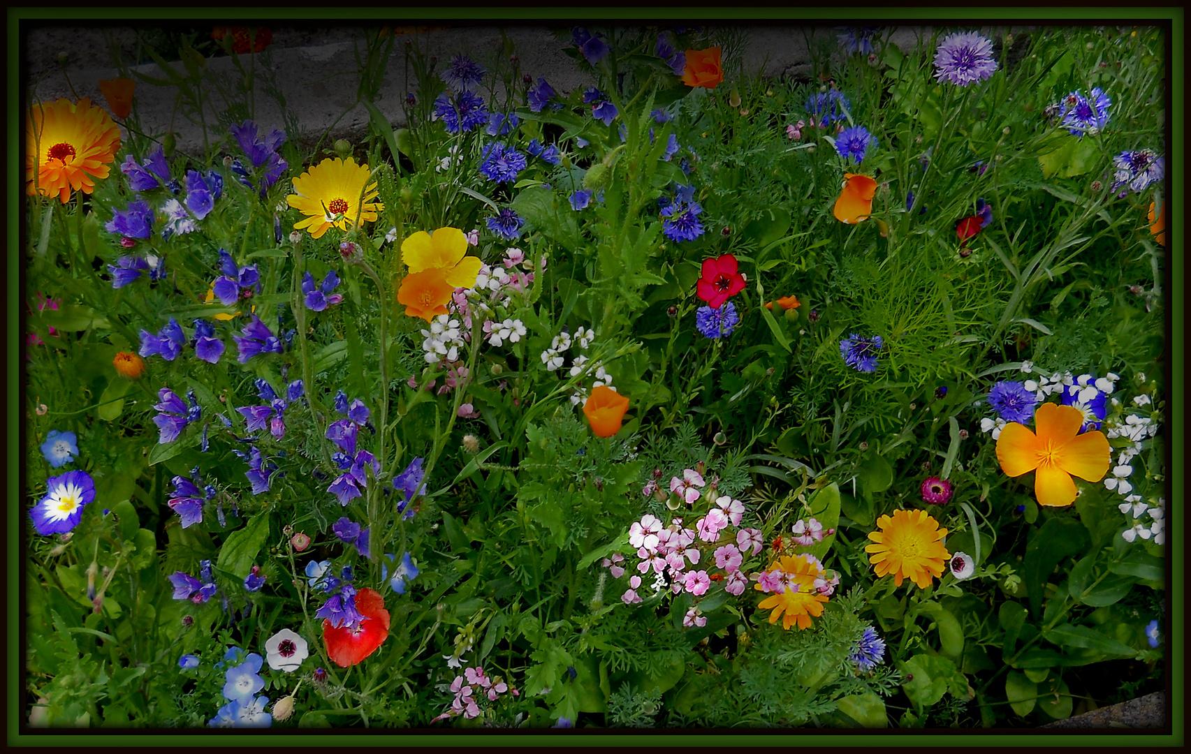 Bunte Blumenmischung