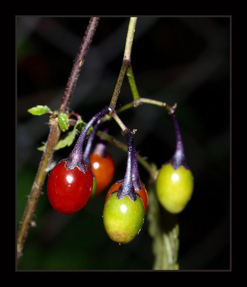 Bunte Früchte ...