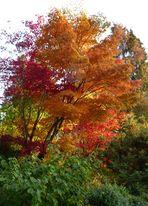 Bunte Herbstbäume