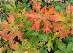 Bunte Herbstblätter...