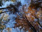 Bunte Herbstmischung