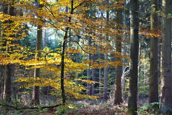 Bunte Herbstwelt