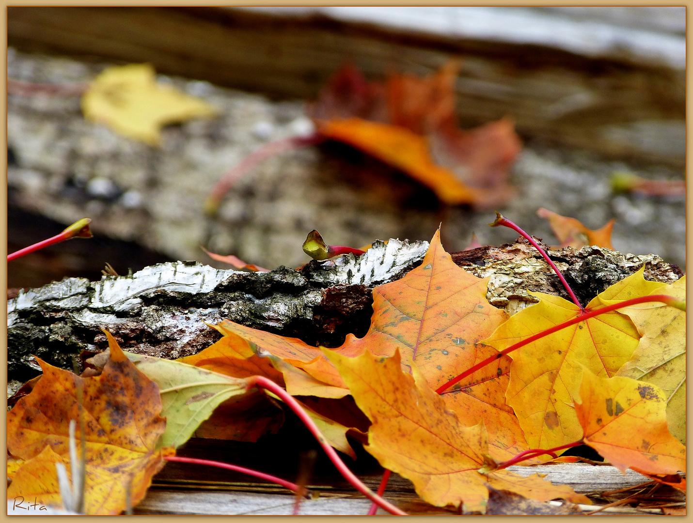 bunte Herbstzeit...