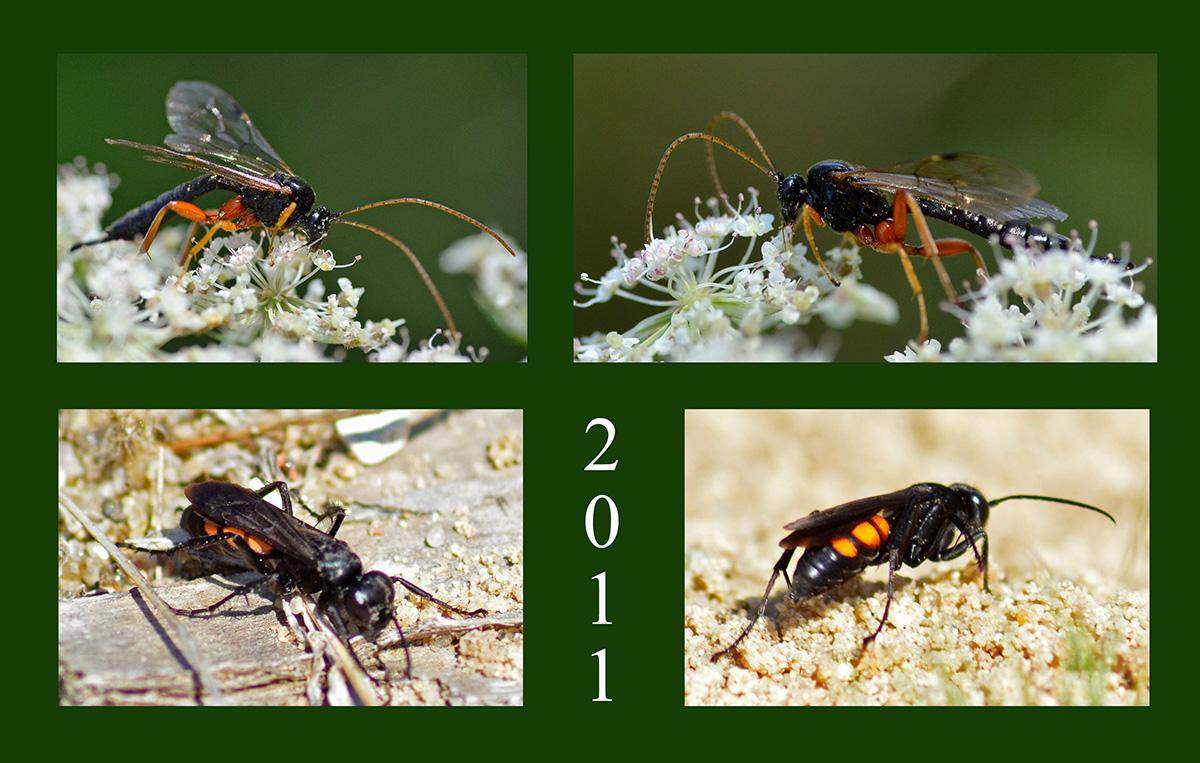Bunte Insektenwelt am Wegesrand 1
