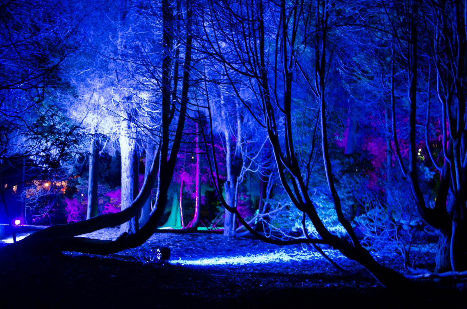 Bunte Nacht - Wald