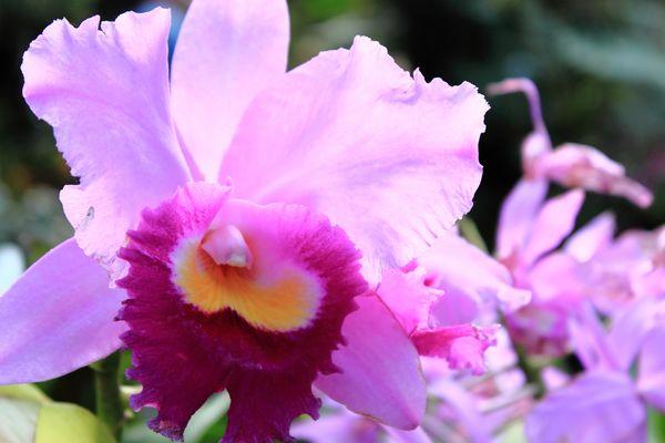 Bunte Orchidee #4