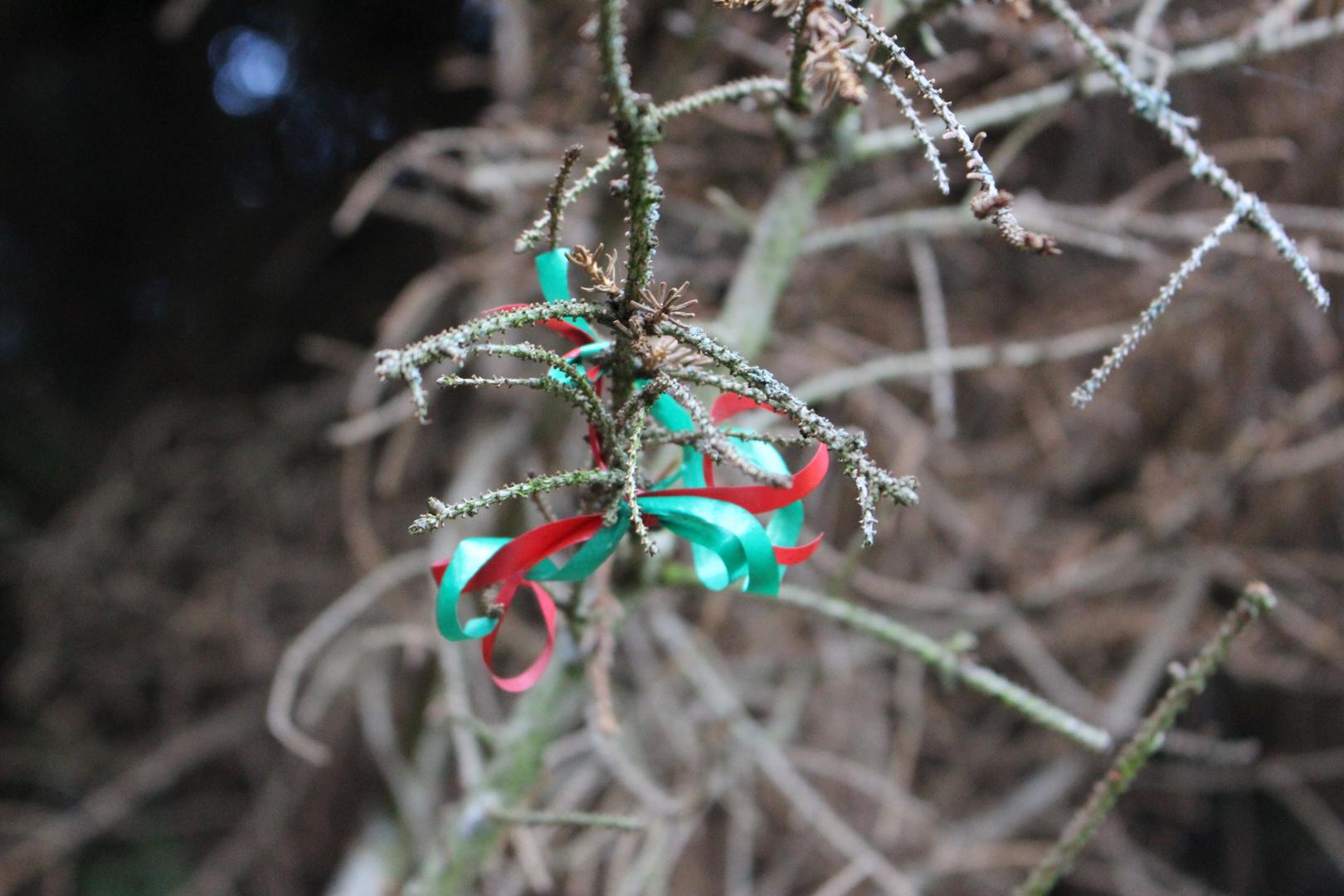 Bunte Schleife am Baum