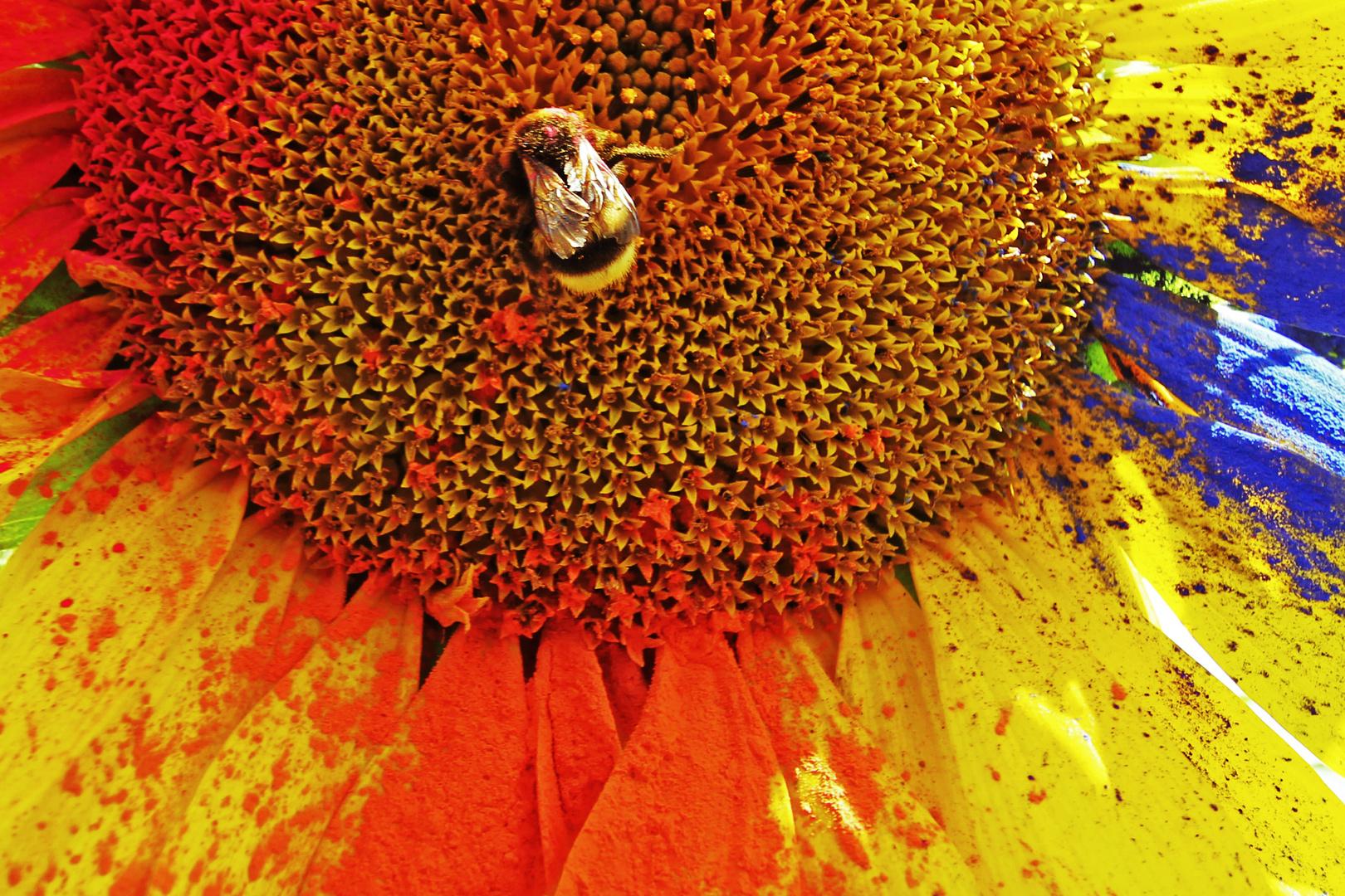 Bunte Sonnenblume