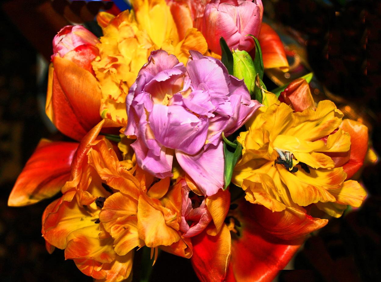 Bunte Tulpen als Sonntagsgruß