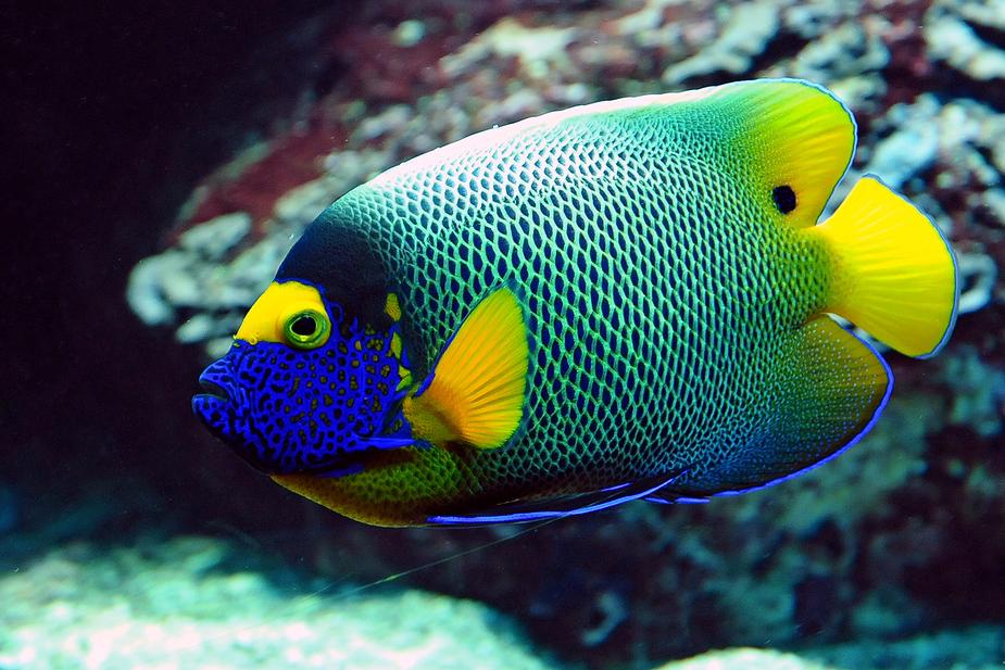 Bunte Unterwasserwelt Foto & Bild | tiere, zoo, wildpark & falknerei ...