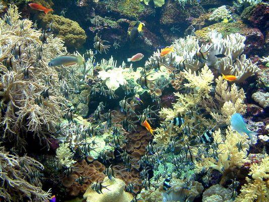 Bunte Vielfalt im Aquarium in Puerto de la Cruz, Loro Parque