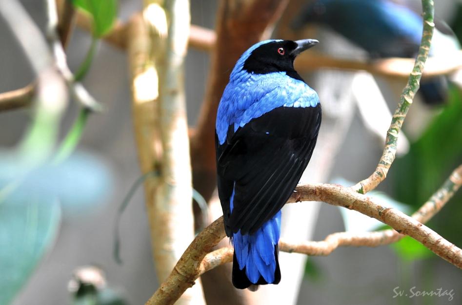 Bunte Vögel gibt es viele ..