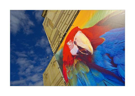 Bunte Vögel vor dem Künstlerhaus