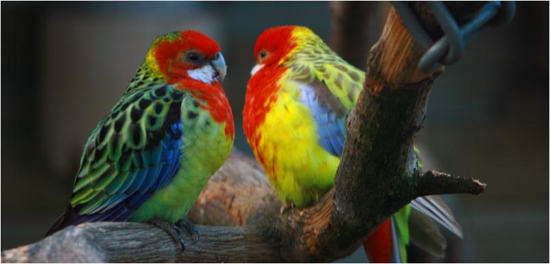 Bunte Vogel Freunde