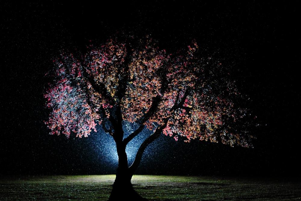 Bunter Baum im Regen