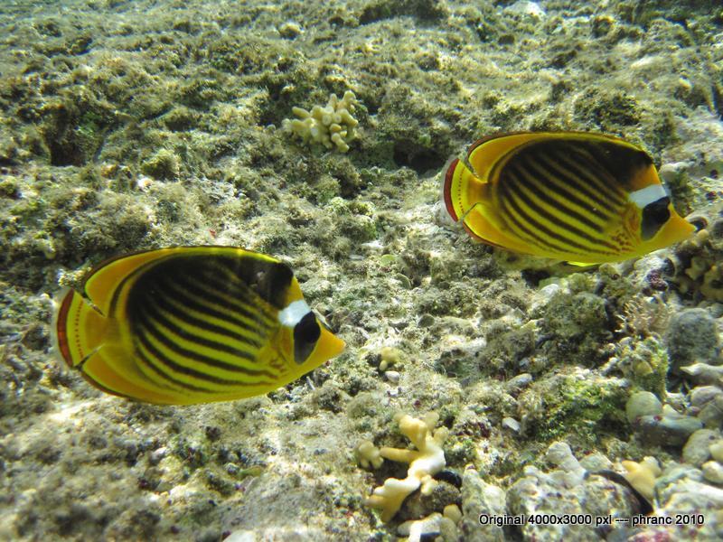 Bunter Fisch 2