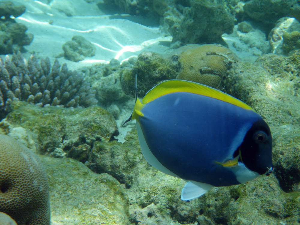 bunter Fisch im indischen Ozean - Malediven