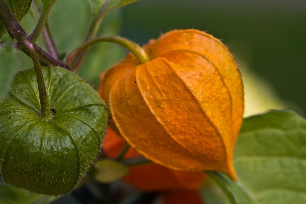 Bunter Herbst 1