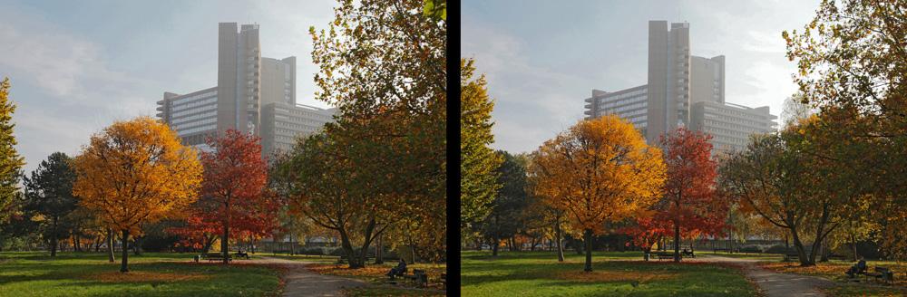 Bunter Herbst (3D Kreuzblick)