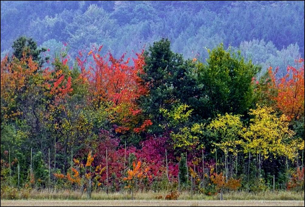 Bunter Herbst...
