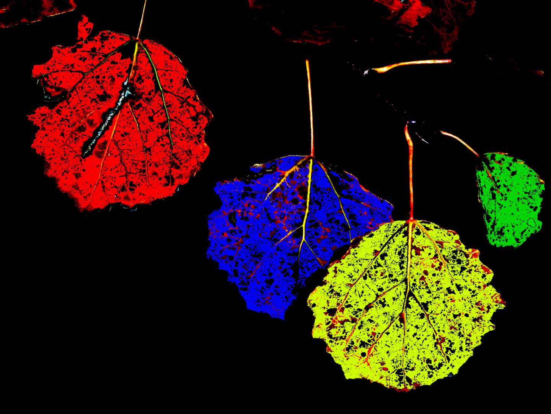 Bunter Herbst................