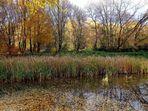 Bunter Herbst am Weiher