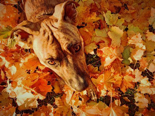 Bunter Herbst die Zweite^^