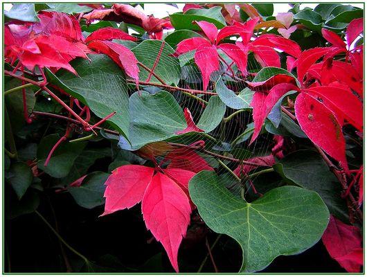 bunter Herbst2
