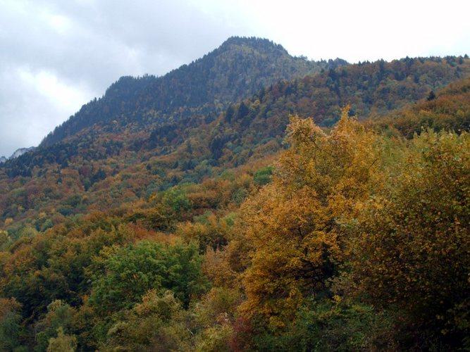 Bunter Herbstwald am Genfer See...