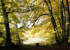bunter Herbstwald im Altmühltal