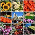bunter Markttag in Münster